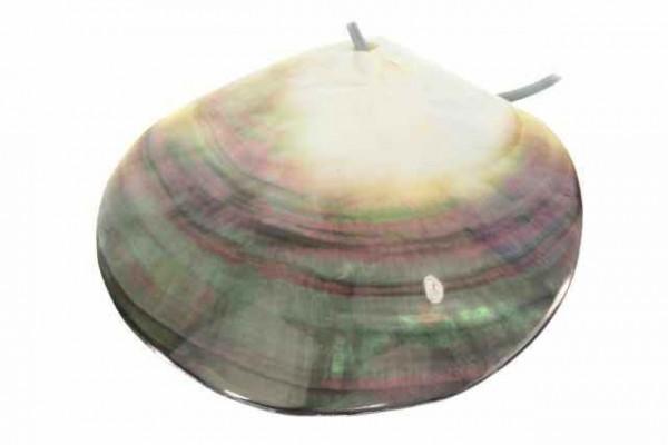 Muschel mit Bohrung, 60-90mm, Muschel Black-Lip (pinctada margaritifera)
